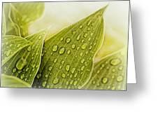 Raindrops On Hostas Greeting Card