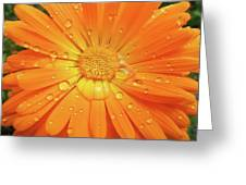 Raindrops On Orange Daisy Flower Greeting Card
