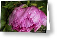 Raindrops On Peony Greeting Card