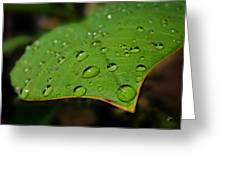 Raindrops On Plumeria Leaf Greeting Card