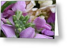 Raindrops On Purple And White Flowers Greeting Card