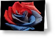 Raindrops On Rose Greeting Card