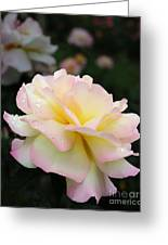 Raindrops On Rose Petals Greeting Card