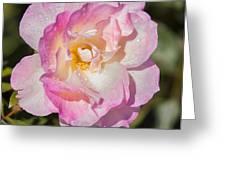 Raindrops On Rose Petals Greeting Card