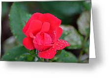 Raindrops On Rosebud Greeting Card