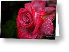 Raindrops On Roses Greeting Card by Peggy Hughes