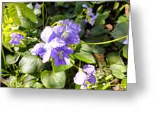 Raindrops On Violets Greeting Card