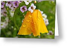 Rained Upon Greeting Card