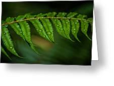 Rainfall On Leaf Greeting Card