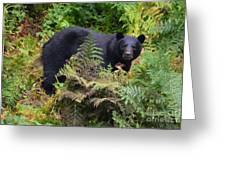 Rainforest Black Bear Greeting Card