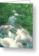 Rainforest Cascade Near Hana Maui Hawaii Greeting Card