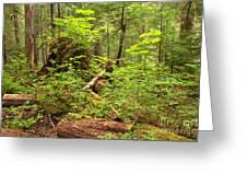Rainforest Green Everywhere Greeting Card