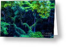 Rainforest In Waimea Valley Greeting Card by Lisa Cortez