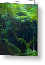 Rainforest In Waimea Valley Too Greeting Card