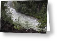 Rainforest River Greeting Card