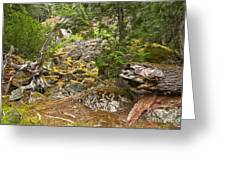 Rainforest Rock Slide Greeting Card