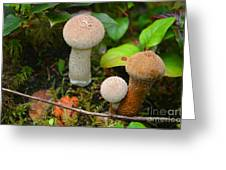 Rainforest 'shrooms Greeting Card