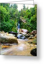 Rainforest Stream New Zealand Greeting Card