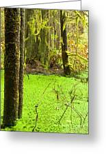Rainforest Wetland Wildernis Of West Coast Bc Greeting Card