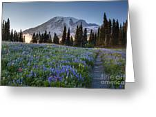 Rainier Evening Lupine Fields Greeting Card