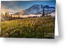 Rainier Golden Sunlit Meadows Greeting Card