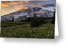 Rainier Meadows Splendor Greeting Card