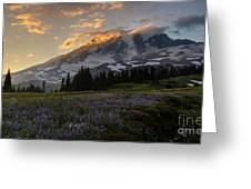 Rainier Purple Lupine Carpet Greeting Card