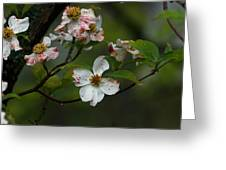 Rainy Day Dogwood Greeting Card