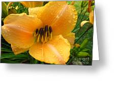 Rainy Day Lily Greeting Card