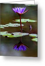 Rainy Day Lotus Flower Reflections IIi Greeting Card