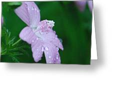 Rainy Day Mallow Greeting Card