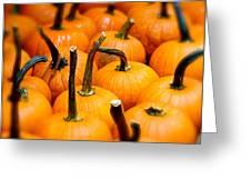 Rainy Day Pumpkins Greeting Card