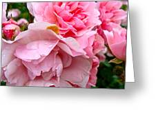 Rainy Day Roses Greeting Card