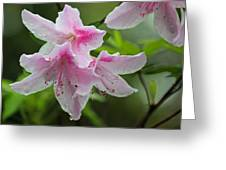 Rainy Day Series - Pink On Pink Azaleas Greeting Card