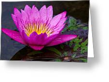 Rainy Day Water Lily Reflections II Greeting Card