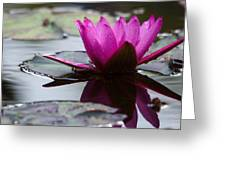 Rainy Day Water Lily Reflections 6 Greeting Card