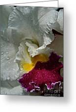 Rainy Orchid Greeting Card