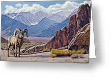 Ram-eastern Sierra Greeting Card