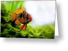 Ram Fish Greeting Card