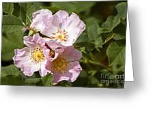 Rambling Rose 3 Greeting Card