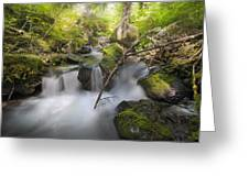 Ramona Creek Greeting Card