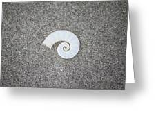 Rams' Horm Shell Greeting Card