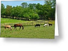 Ranch Daisies Greeting Card