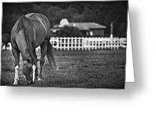 Ranch Horse Greeting Card