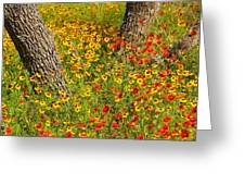 Ranch Wildflowers And Trees 2am-110522 Greeting Card