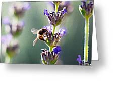 Random Lavender Sampling Greeting Card