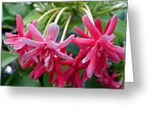 Rangoon Creeper Flower Greeting Card
