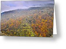 Raniy Days In Automn Greeting Card