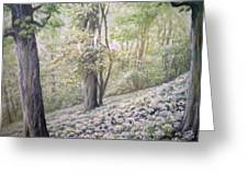 Saltburn Valley Gardens - Ransome Wood Greeting Card