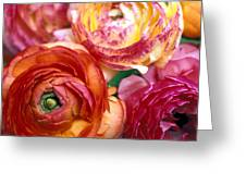 Ranunculus Close-up Greeting Card